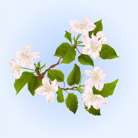 appletree: Apple tree branch with flowers  spring background vector illustration