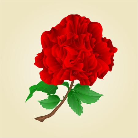 rose with stem: Flower red rose stem with leaves and blossoms vintage vector illustration Illustration