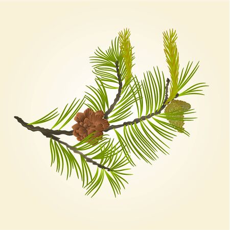 pinecone: Blooming pine tree and pine cones branch natural background vector illustration