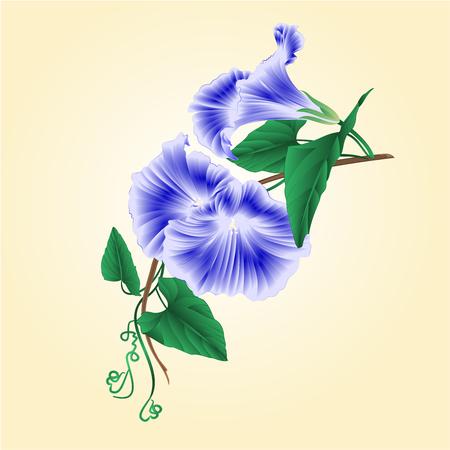 ipomoea: Flower Morning glory  blue  vintage vector illustration