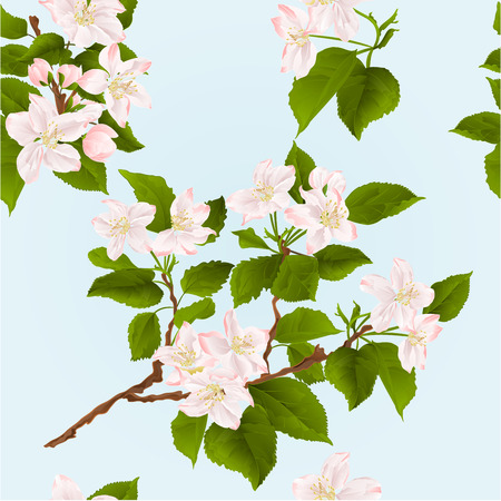 appletree: Seamless texture apple tree branch  with flowers and buds spring background vector illustration Illustration