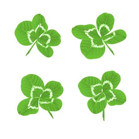clovers: Leaf clovers  symbol of good luck St. Patricks day illustration