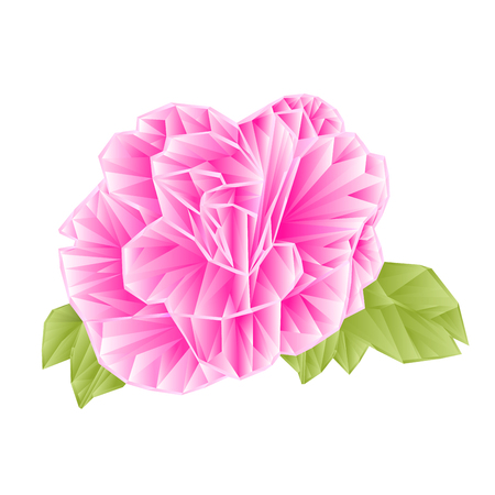camellia japonica: Camellia Japonica pink flower polygons on a white background illustration