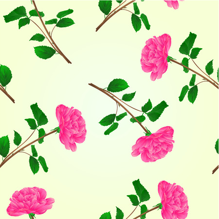 centifolia: Seamless texture pink rose stem with leaves and blossoms vector illustration