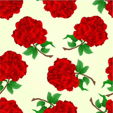 centifolia: Seamless texture flowers red roses stem with leaves and blossoms vintage vector illustration
