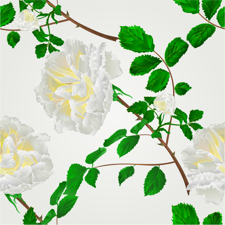freshens: Seamless texture rose white flower stem with leaves and blossoms vector illustration