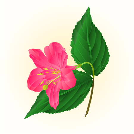 shrub: Pink flower decorative shrub Weigela vintage vector illustration