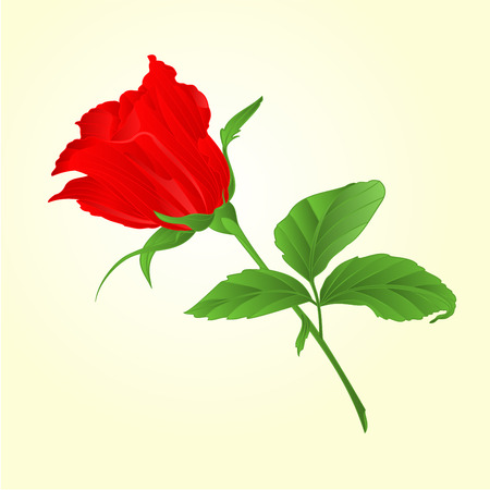 freshens: Rosebud red rose twig with leaves vector illustration