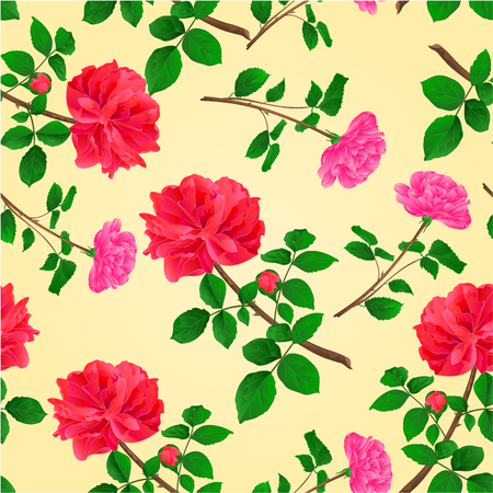 centifolia: Seamless texture twig red and pink roses  with leaves and bud vector illustration Illustration