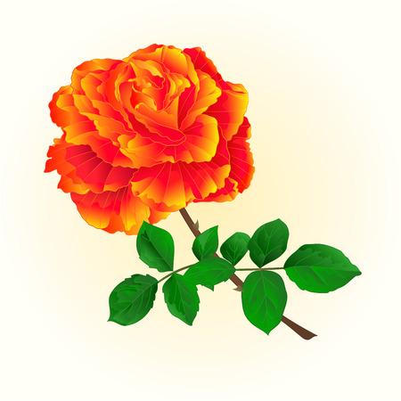 orange rose: Rose orange isolated flower  vintage on a white background illustration Illustration