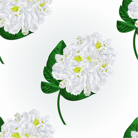 pollinate: Seamless texture white rhododendron twig in bloom  mountain shrub illustration Illustration