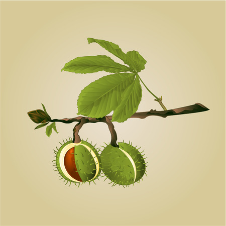 chestnut tree: Chestnut tree conkers with leaves vintage fall background vector illustration