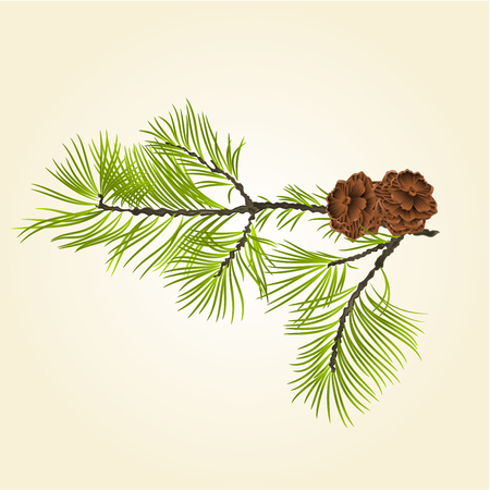 Conifer Branch Pine  with pine cones natural background illustration