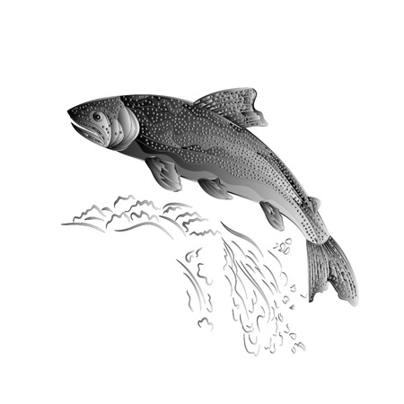 cutthroat: Trout jumps  in stream salmon-predatory fish as wrought metal vintage  illustration Illustration