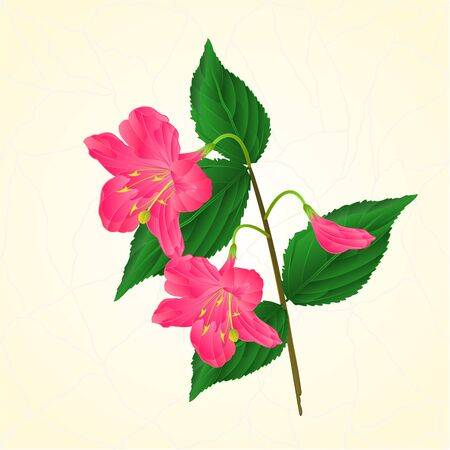 shrub: Pink flower decorative shrub Weigela cracks vintage vector illustration