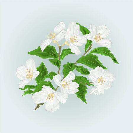 vintage: Flower Jasmine  branch isolated on blue background  vintage vector illustration