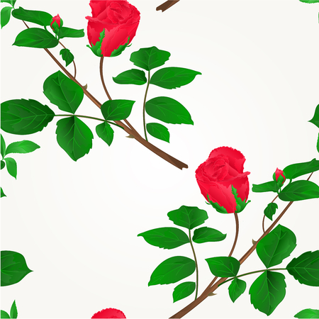 Rosebud red stem with leaves and blossoms illustration.