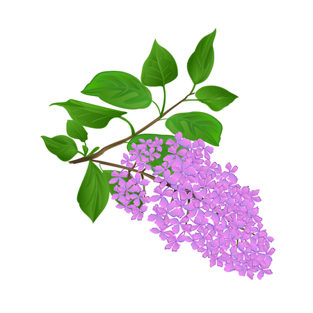 Ramita lila con flores y hojas vintage mano dibujar ilustración de vector de fondo natural