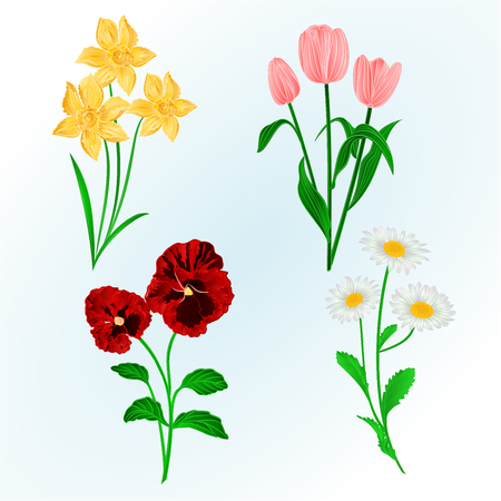 Spring flowers Daffodils ,Pansies,Tulips and daisies vintage hand draw vector botanical illustration for design Illustration