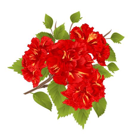I fiori tropicali dell'ibisco rosso del ramo su una mano botanica dell'illustrazione di vettore d'annata bianco del fondo disegnano Archivio Fotografico - 83396241