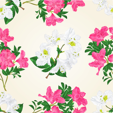 Seamless texture pink and white flowers rhododendron twig with leaves mountain shrub vintage vector illustration hand draw Ilustração