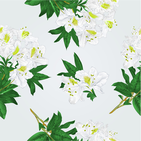 Seamless texture branch White flowers rhododendron  mountain shrub vintage vector illustration hand draw