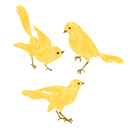 Singing gold birds Canary vintage  set two vector  animals illustration for design hand draw Vettoriali