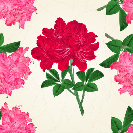 azalea: A Seamless texture flowers pink and red rhododendrons twig Mountain shrub vintage vector botanical illustration hand draw. Illustration