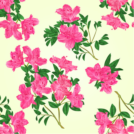 azalea: Seamless texture pink rhododendron twig with flowers and leaves mountain shrub vintage vector illustration hand draw