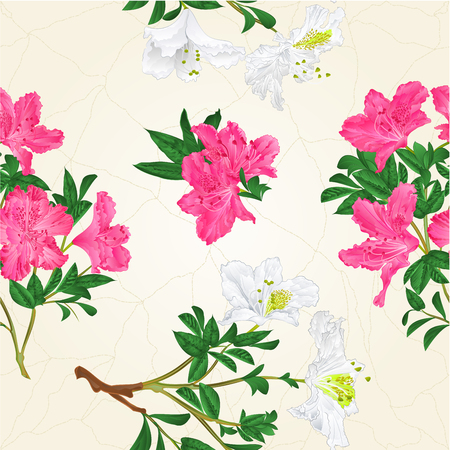 Texture White and pink rhododendron branch  vintage botanical illustration hand draw Иллюстрация