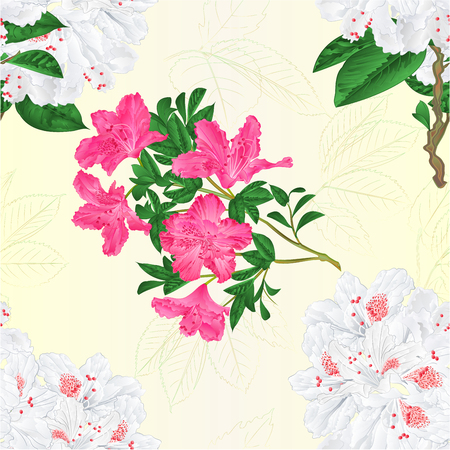Seamless texture twig white and pink flower rhododendron  vintage vector editable illustration hand draw.