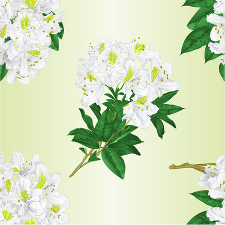 Seamless texture branch White flowers rhododendron   vintage  vector editable illustration hand draw Иллюстрация