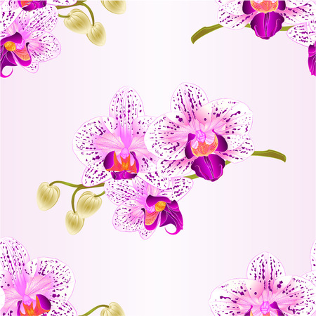 Seamless texture Phalaenopsis Orchid purple and white stem with flowers and  buds