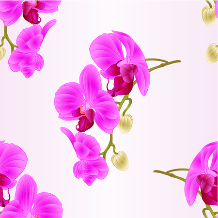 Seamless texture beautiful  Orchid purple Phalaenopsis stem with flowers and  buds