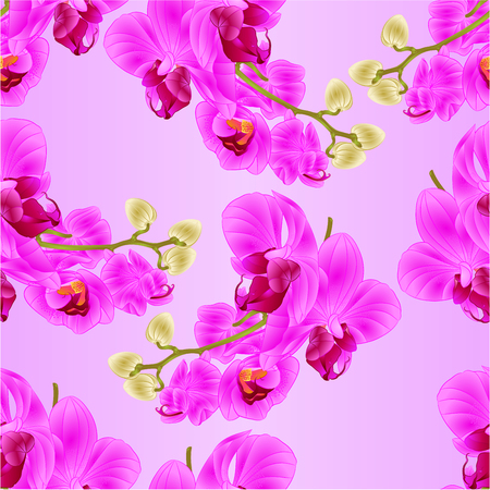 paper background: Seamless texture stem with flowers and  buds beautiful  Orchid purple Phalaenopsis  closeup  vintage  vector editable illustration hand draw