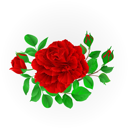 Red rose with buds and leaves vintage  Festive background vector illustration editable hand draw