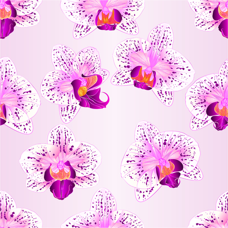 paper background: Seamless texture of beautiful purple and white Orchids Illustration