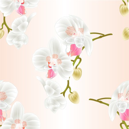 paper background: Seamless texture of beautiful Orchids