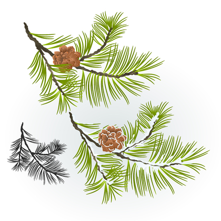 Pine tree and pine cones branch autumnal and winter snowy natural background vector illustration editable hand draw