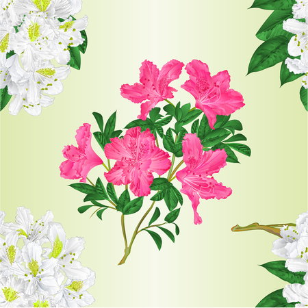 Seamless texture branch White and pink flowers rhododendron   vintage  vector editable illustration hand draw Illustration