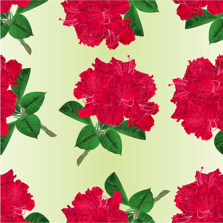 ericaceae: Seamless texture flowers red rhododendrons twig shrub on a white background vintage vector illustration editable hand draw