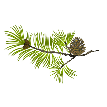 Pine tree Branch and pine cone on a white background vector illustration editable hand draw Illusztráció