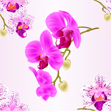 Seamless texture  Orchids purple and white and purple Phalaenopsis stem with flowers and  buds closeup  vintage  vector editable illustration hand draw
