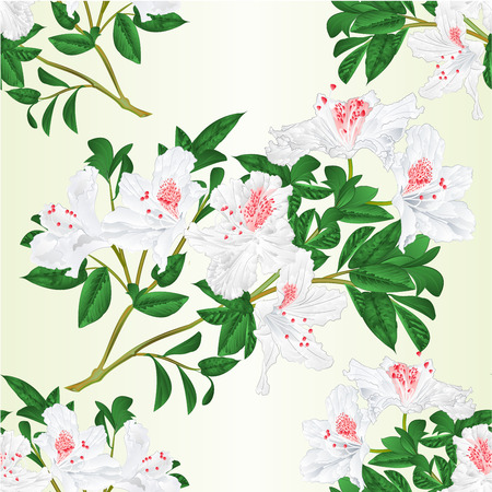 Seamless texture white rhododendron twig with flowers and leaves vintage vector illustration.