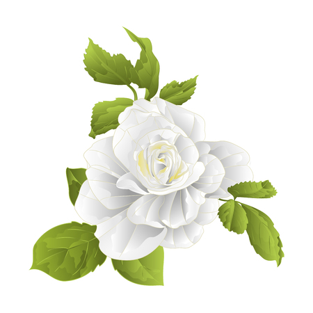 Stem of a white rose and leaves on a white background