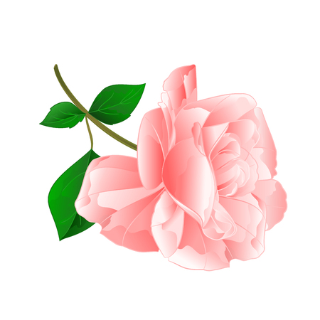 Rose pink flower twig with leaves nature background vintage vector illustration editable hand draw