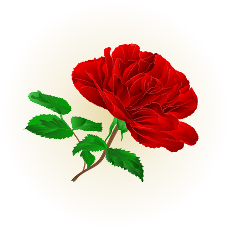 Simple red rose stem with leaves on white background vector illustration editable hand draw