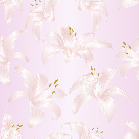 Seamless texture Lily white Lilium candidum and white flowers with vintage vector illustration Hand drawn