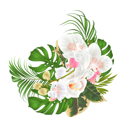 Bouquet with tropical flowers floral arrangement, beautiful white orchid, palm, philodendron and ficus vector illustration