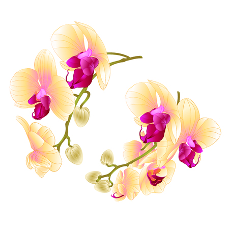 Branch orchids on a white background vector illustration.